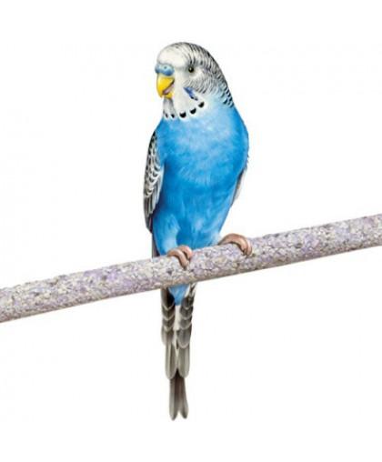 Жердочка для птиц PENN-PLAX BA231 цемент 30х1см 2шт