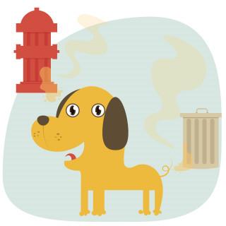 Средства от пятен и запаха собак